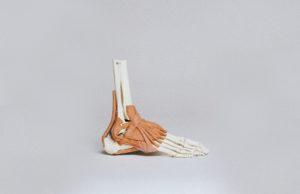 Anatomie pied