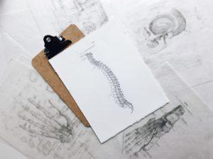 dessin de la colonne vertébrale